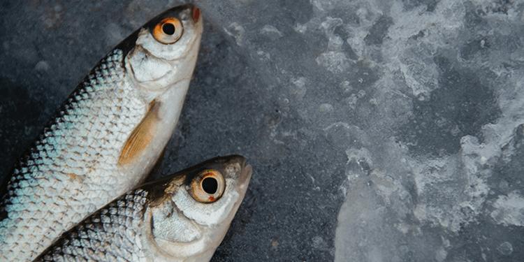 Tesislerimizde Balıkların Saklanma Koşulları